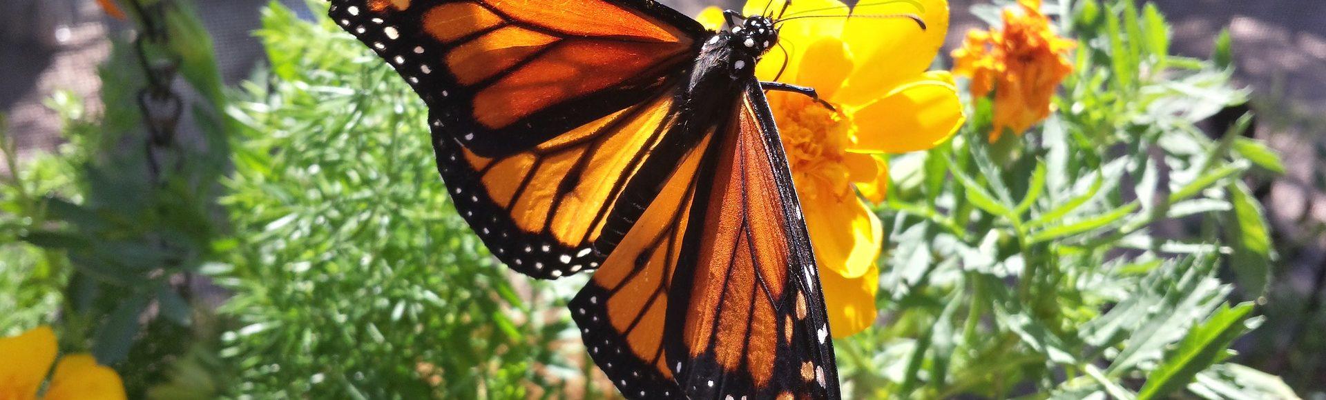 Celebrate National Pollinator Week June 19-25