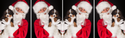 pic_featured_dogwSanta